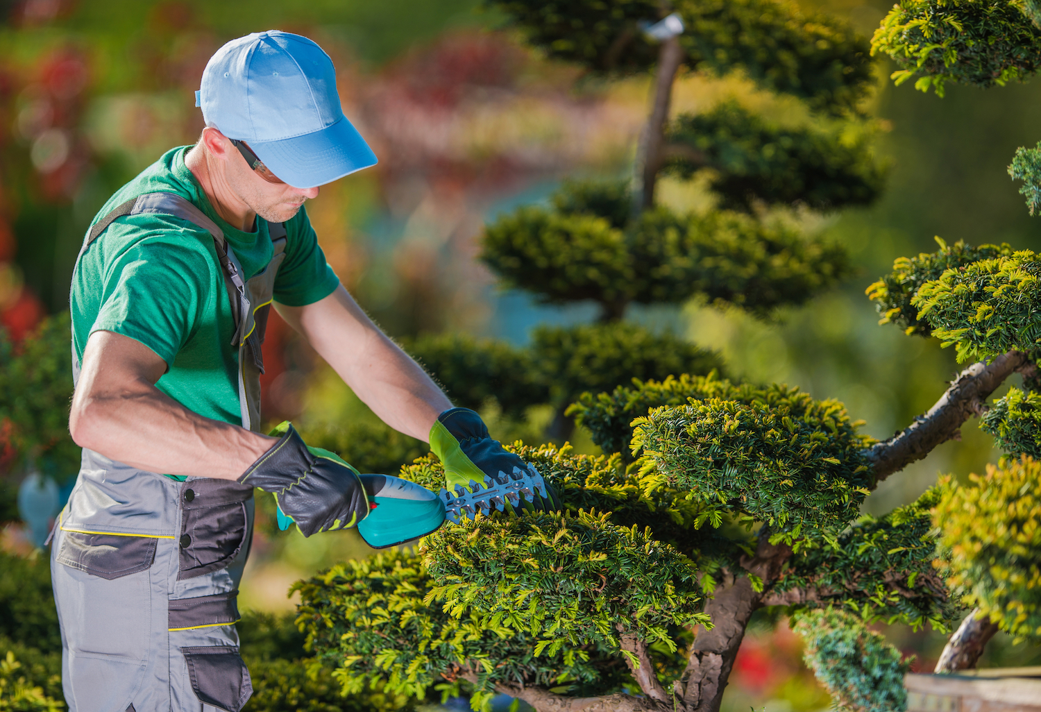 Tree Removal & Tree Trimming Services